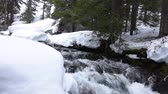 Fast moving chute in stream that leads to Icicle Creek with snowy banks in evergreen pine forest in Cascade Mountains on cloudy early Spring day in Washington, USA with natural sound Vídeos