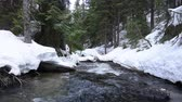 Clear fast moving stream that leads to Icicle Creek with snowy banks in evergreen pine forest in Cascade Mountains on cloudy early Spring day in Washington, USA with natural sound Vídeos