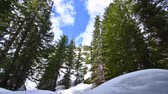 сосна : Wide angle time lapse white clouds passing across blue sky above rugged evergreen pine forest and deep snow in Cascade Mountains in Washington, USA Стоковые видеозаписи