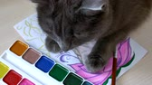 piccolo : gray cat lies in a painting with paints Filmati Stock