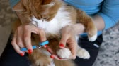 preocupacion : mistress cuts red cats claws