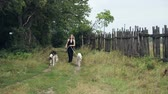 greyhound : girl in black dress with two Russian greyhounds Stock Footage