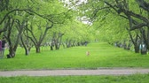 palouk : spring park with apple trees, Kolomna Russia Moscow