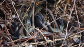 adder : Grass Snakes resting in the warmth