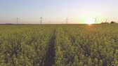 mounted : Wind-Powered Electrical Generators at Rapeseed Field. Aerial view Stock Footage