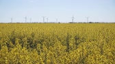 mounted : Wind-Powered Electrical Generators at Rapeseed Field.