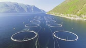 yem : Video of Fish Farm in Norway. Blue sea and mountains with vegetation. Aerial shot. Top view. Stok Video