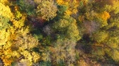 yaprak döken : Fall Wood from above. Landscape. Aerial clip Stok Video