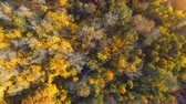 ohromující : AERIAL: Flying above the stunning colorful treetops on sunny day.