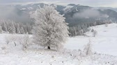 ski freeride : Flying around a frozen very beautiful tree. Winter tale. Landscape to admire