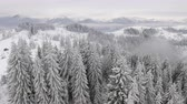 coldness : frozen very beautiful trees. Winter tale. Landscape to admire. superb mountains