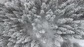 január : frozen very beautiful trees. Winter tale. Landscape to admire. superb mountains