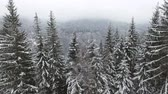 coldness : Rural landscape. Happy New Year. frozen very beautiful trees. Winter tale. Stock Footage