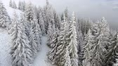 массивный : Flying over a beautiful winter forest in the highlands
