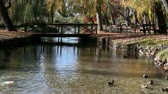 umbrie : Video clip of pond with ducks, Clitunno springs, Umbria, Italy.