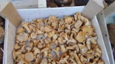 cantharellus : Fresh porcini and chanterelles mushrooms for sale on stand in outdoor market.
