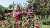romanya : Couple of Romanian retired people talking cheerfully in the garden. Shes keeping a basket full of fresh picked vegetables. Stok Video