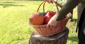 Woman putting old basket full of pumpkins and apples on a cut tree trunk - Concept of autumn harvest. Archivo de Video