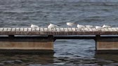 storm : seagulls on the wharf near Dnipro  River