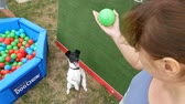 лиса : DNIPRO, UKRAINE - 2 SEPTEMBER, 2018: fox terrier dog near the pool of colored balls jumping to ball on dog show on September 2, 2018 in Dnipro, Ukraine