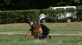obstacle course : DNIPRO, UKRAINE- AUGUST 7, 2018: Belgian shepherd executes commands at 3d national championship of canine national polices on August 7, 2018 in Dnipro, Ukraine