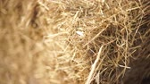 haulm : Bale of hay tied with string-2