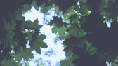 dof : Green Leaves with beautiful lens flare Stock Footage