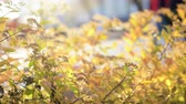 se movendo para cima : Autumn background with yellow leaves and flower. Sunny light. Backdrop rotate. Clear place for your isolated text closeup. Empty space for your title copy space. Copyspace logo to blank design 4k.
