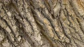 materiaal : Oak bark close-up pan rotate. Tree closeup rotation background of pine macro 4k. Clear place for your isolated text. Empty space for your title copy space. Copyspace logo to blank design.