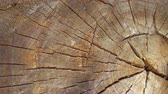 materiaal : Stump slowly rotates close-up background. Saw cut wood spinning closeup background. Wooden circle. Clear place your isolated text. Empty space for your title copy space. Copyspace logo to blank design