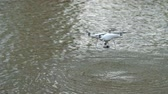 электроника : Quadcopter is flying over the water surface. Drone ripples over beautiful lake. Air robot held above water with help of small mechanisms. This device remotely controlled and can shoot landscape around