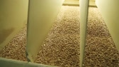 молоть : Flour mill production. Sifting flour and breaking into different fractions. Quality control of grinding of wheat flour. Workshop at a flour mill with a shredding equipment. Industrial mill. Стоковые видеозаписи