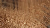 farinha integral : Wheat grain close-up. Wheat is unloaded from truck at flour mill. Wheat is strewing. Golden wheat rain. Transportation of Grain in a truck to a mill. Granary in the milling plant. Grain flour mill.