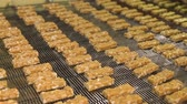 amendoins : Nougat with nuts of golden color on the conveyor in a confectionery factory. Bars of nougat with peanuts on production line of the factory for production of sweets. Cutting of nougat and nuts bars.