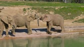 young elephants : Young elephants play near a watering hole in a safari park.