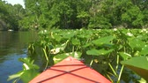 vor : Red kayak boat floats along the water lilies, slow motion video. Kayaking along the rainforest along the river in the jungle. Red boat sails along the river. River trip on canoe boat in jungle, POV.