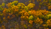 yaprak döken : Autumn forest from above. Colorful forest aerial view. Fall nature. Top view on beautiful colored trees in october. Multi Colored sunny autumn landscape from top down. Camera rotates, top down view. Stok Video