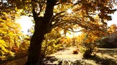 windy : Autumn trees in the park Stock Footage