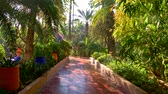 palmiye : Walking Majorelle Garden in Marrakesh, Morocco during a bright sunny day. UHD Stok Video