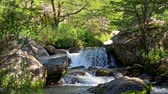 İskandinavya : Water falling slowly in cascades from a rock in a waterfall in Norway surrounded by woods. UHD Stok Video