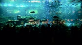 коралловый : Timelapse of people watching fish at the huge aquarium