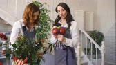многоцветный : Two young handsome chef florists work at flowers fruit shop making fruit and vegetable bouquet