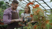 organický : Young couple owners work in garden center. Attractive man and woman in apron count flowers using tablet computer during working in greenhouse