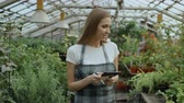 dolly : Dolly shot of Young woman working in garden center. Attractive girl check and count flowers using tablet computer during work in greenhouse Stock Footage