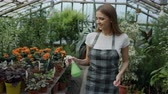 horticultura : Dolly shot of Attractive woman gardener in apron watering plants and flowers with garden sprayer in greenhouse Stock Footage