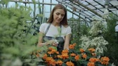 zahradník : Attractive smiling woman gardener in apron watering plants and flowers with garden sprayer in greenhouse Dostupné videozáznamy