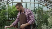 horticultura : Dolly shot of Attractive man gardener in apron watering plants and flowers with garden sprayer in greenhouse