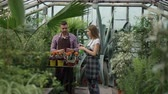 zahradník : Attractive couple work in greenhouse. Woman gardener in apron watering plants with garden sprayer while her husband talking to him Dostupné videozáznamy