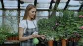 organický : Attractive woman gardener in apron watering plants and flowers with garden sprayer in greenhouse