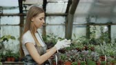 зелень : Young cheerful woman in apron and gloves gardening plants and loosen ground in flower in greenhouse